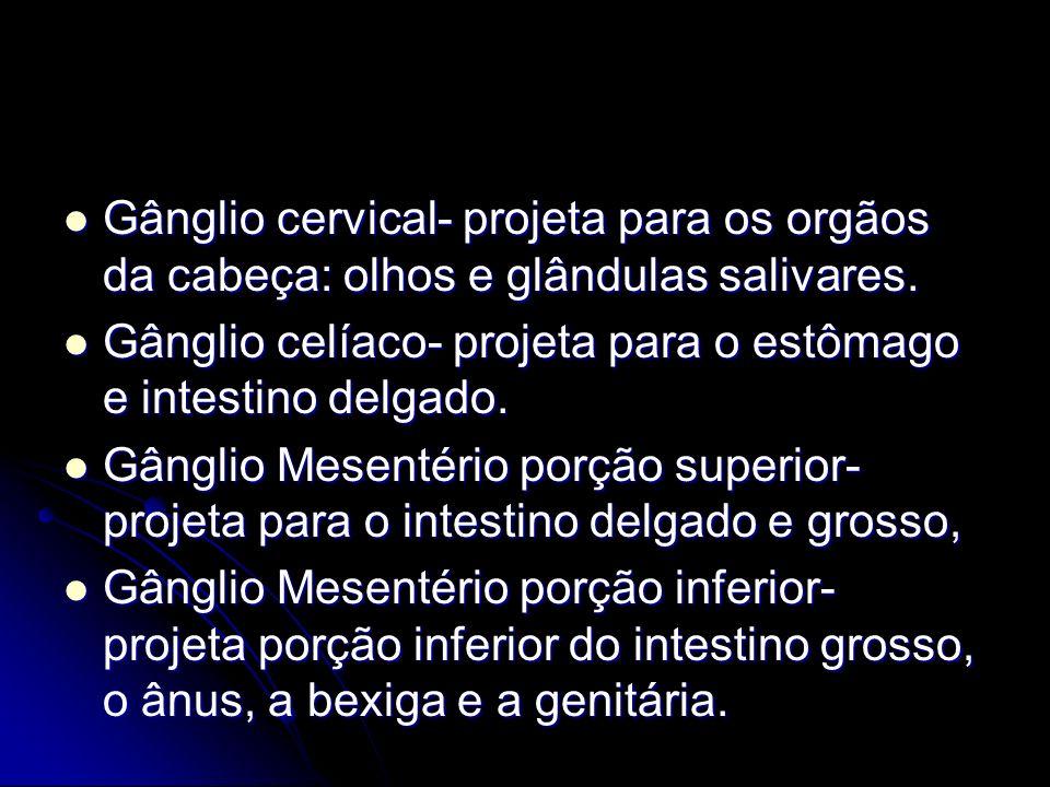Gânglio cervical- projeta para os orgãos da cabeça: olhos e glândulas salivares.