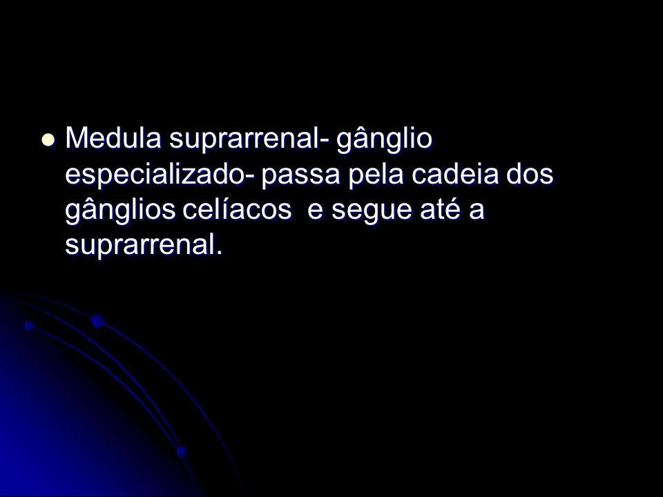 Medula suprarrenal- gânglio especializado- passa pela cadeia dos gânglios celíacos e segue até a suprarrenal.