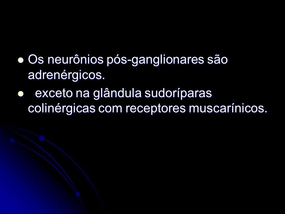 Os neurônios pós-ganglionares são adrenérgicos.
