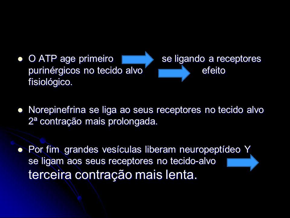 O ATP age primeiro se ligando a receptores purinérgicos no tecido alvo efeito fisiológico.