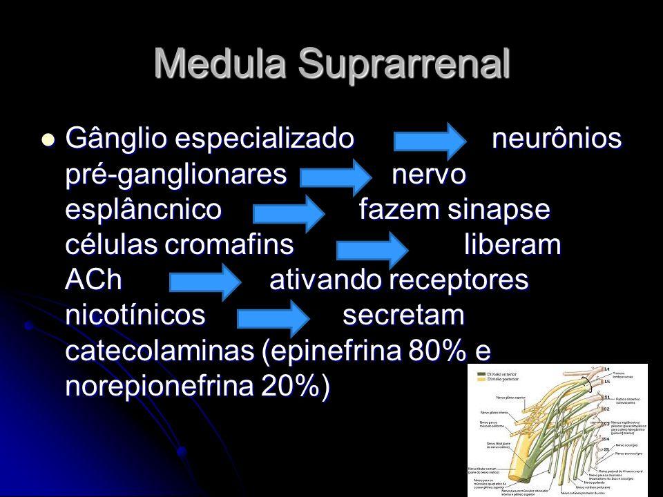 Medula Suprarrenal