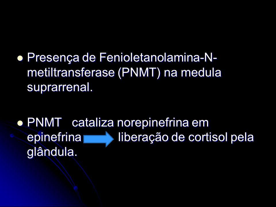 Presença de Fenioletanolamina-N-metiltransferase (PNMT) na medula suprarrenal.