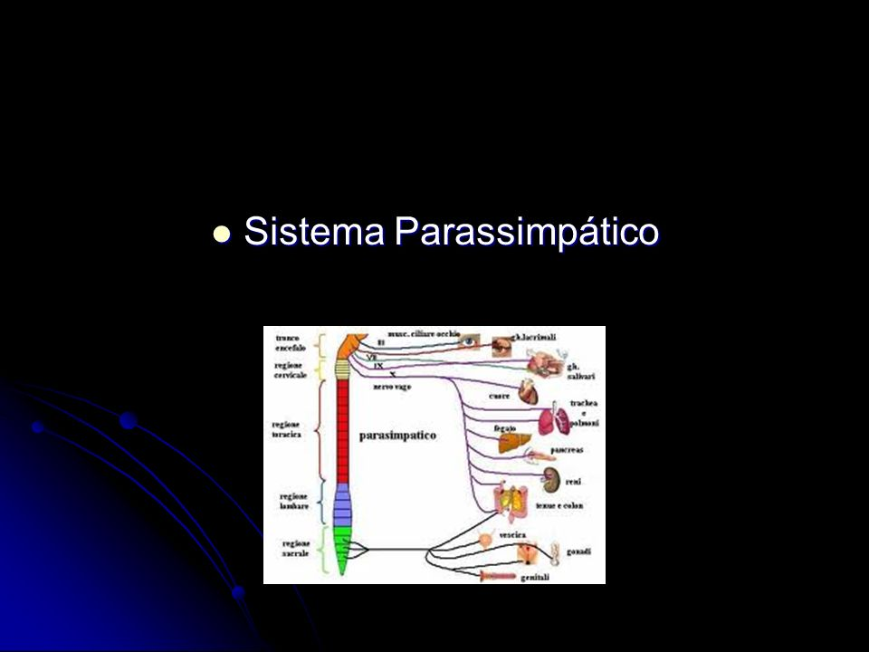 Sistema Parassimpático