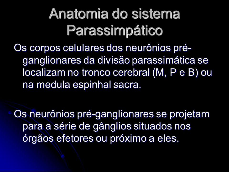 Anatomia do sistema Parassimpático