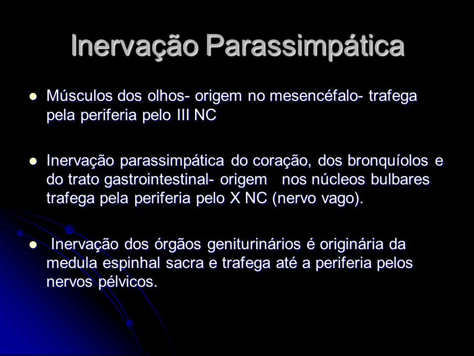 Inervação Parassimpática