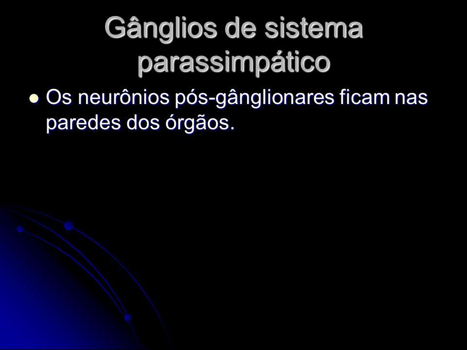 Gânglios de sistema parassimpático