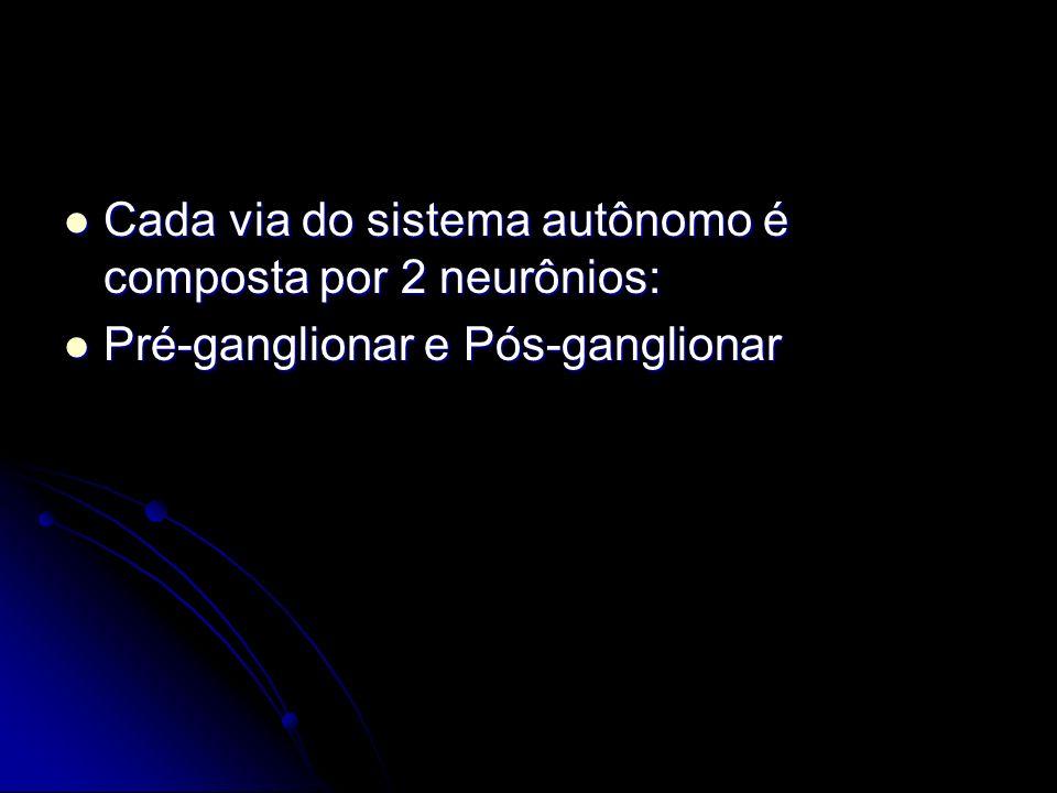 Cada via do sistema autônomo é composta por 2 neurônios: