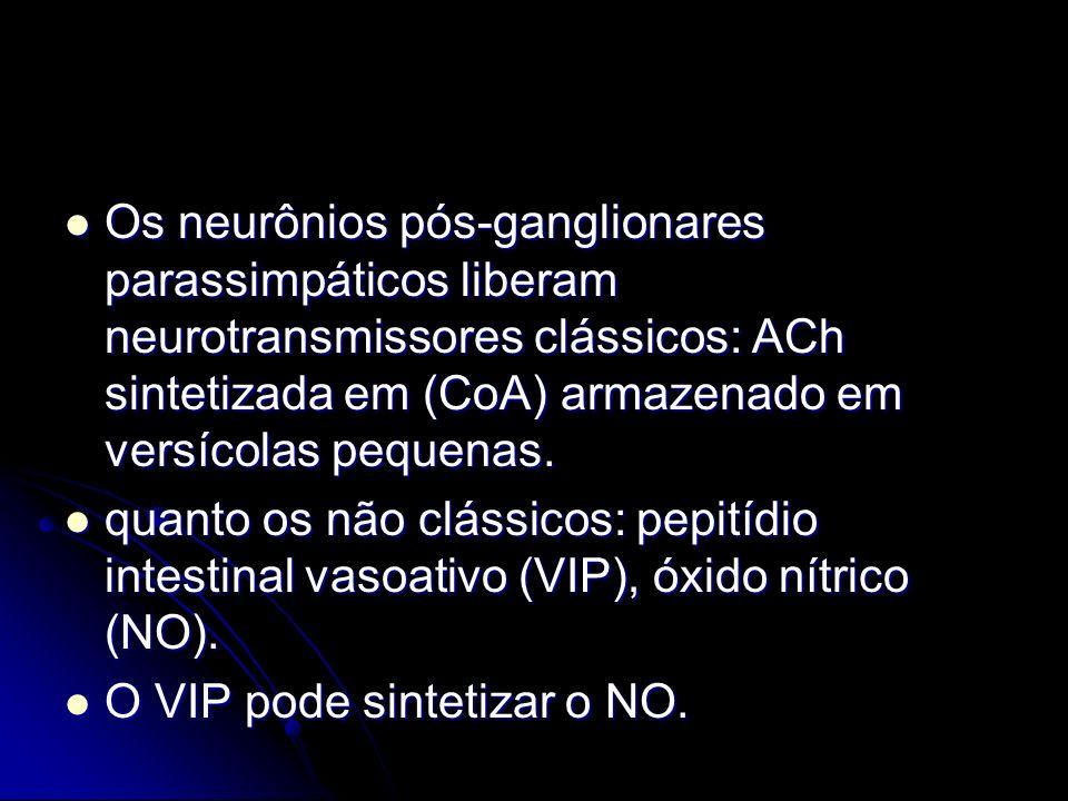 Os neurônios pós-ganglionares parassimpáticos liberam neurotransmissores clássicos: ACh sintetizada em (CoA) armazenado em versícolas pequenas.