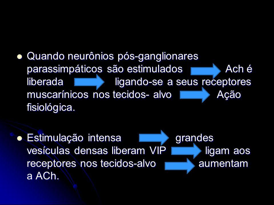 Quando neurônios pós-ganglionares parassimpáticos são estimulados Ach é liberada ligando-se a seus receptores muscarínicos nos tecidos- alvo Ação fisiológica.