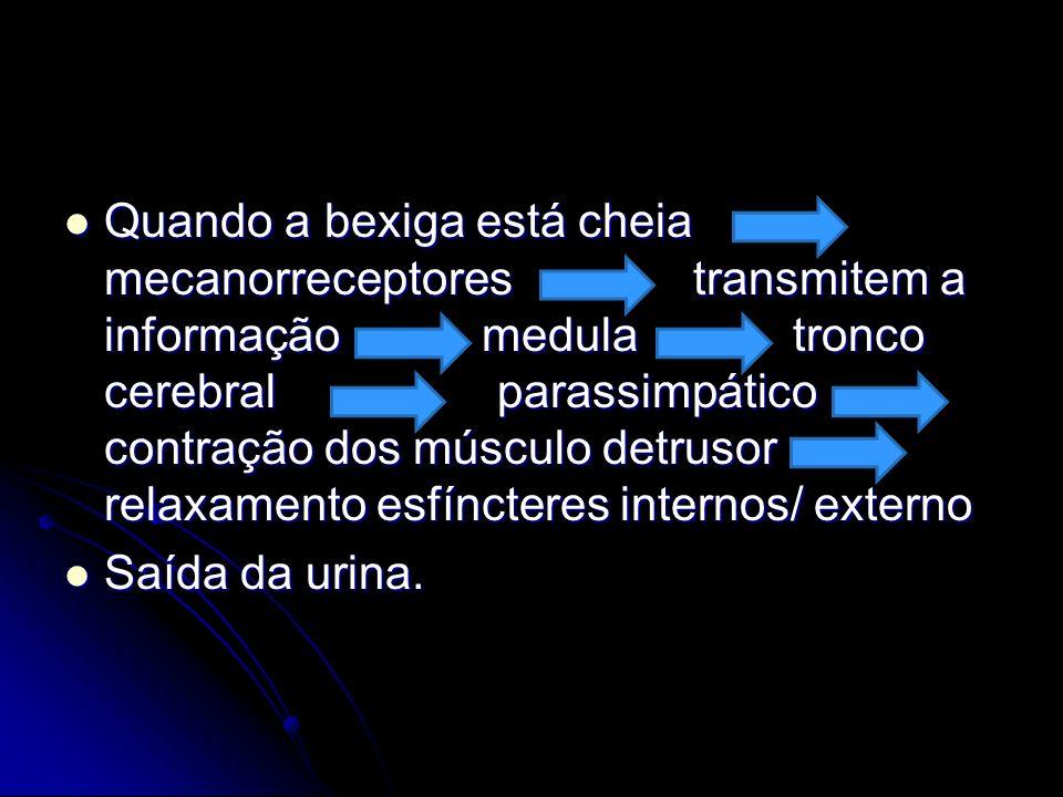 Quando a bexiga está cheia mecanorreceptores transmitem a informação medula tronco cerebral parassimpático contração dos músculo detrusor relaxamento esfíncteres internos/ externo
