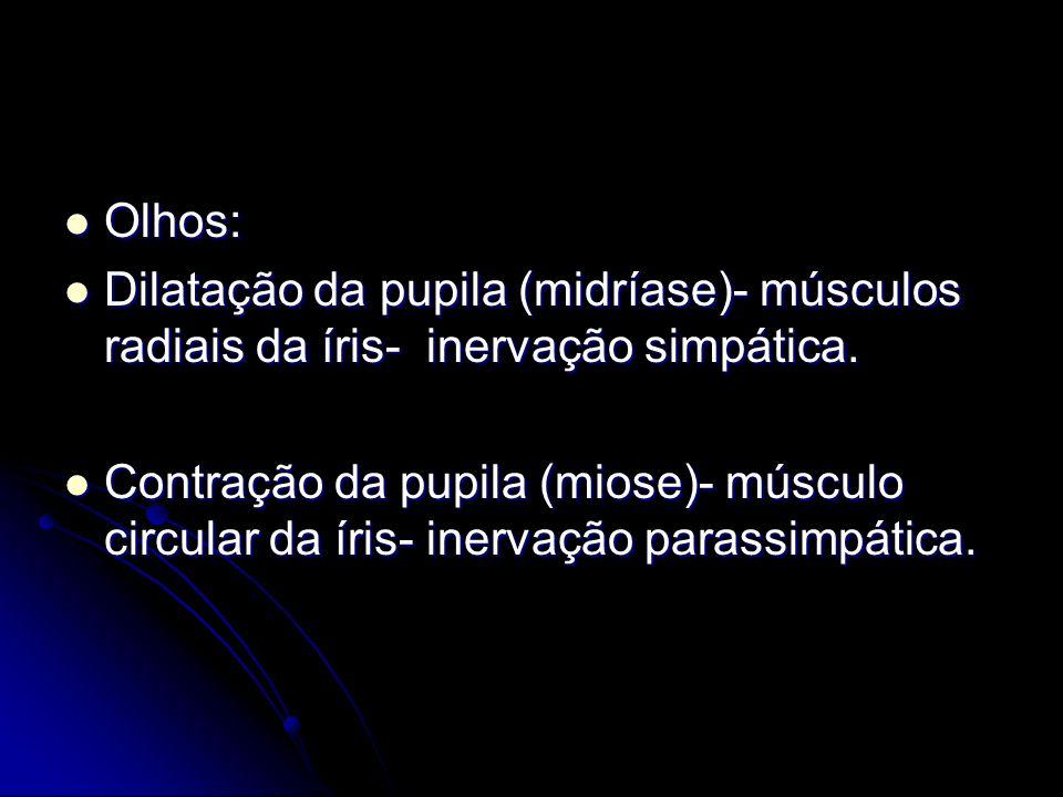 Olhos: Dilatação da pupila (midríase)- músculos radiais da íris- inervação simpática.