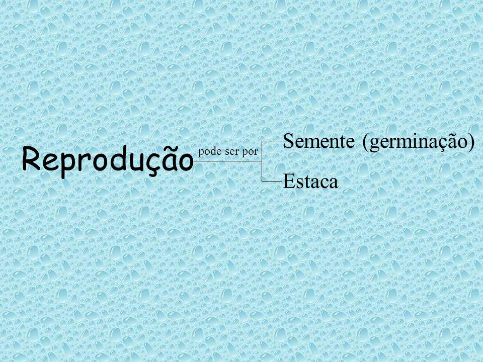 Semente (germinação) Reprodução pode ser por Estaca
