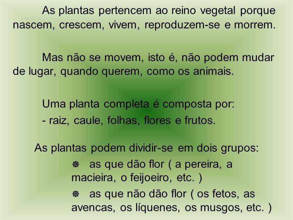 As plantas podem dividir-se em dois grupos: