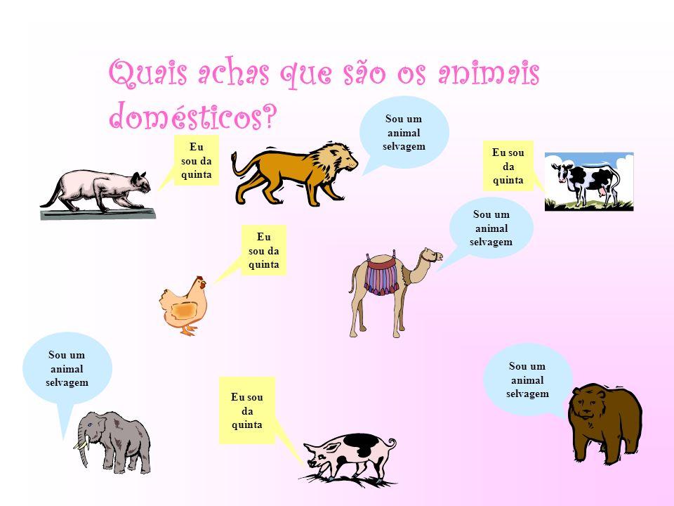 Quais achas que são os animais domésticos