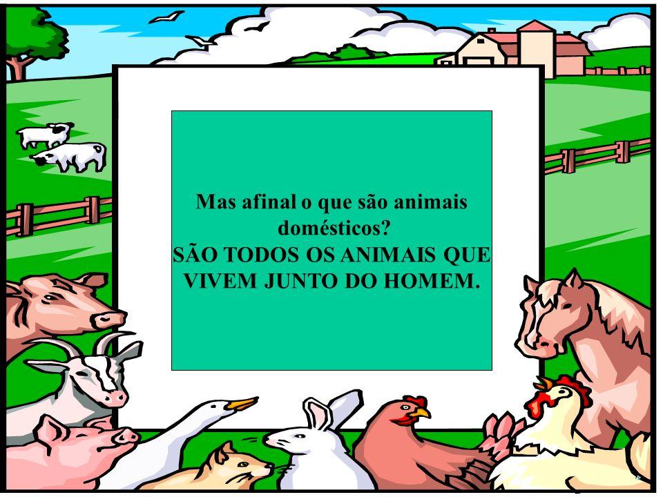 Mas afinal o que são animais SÃO TODOS OS ANIMAIS QUE