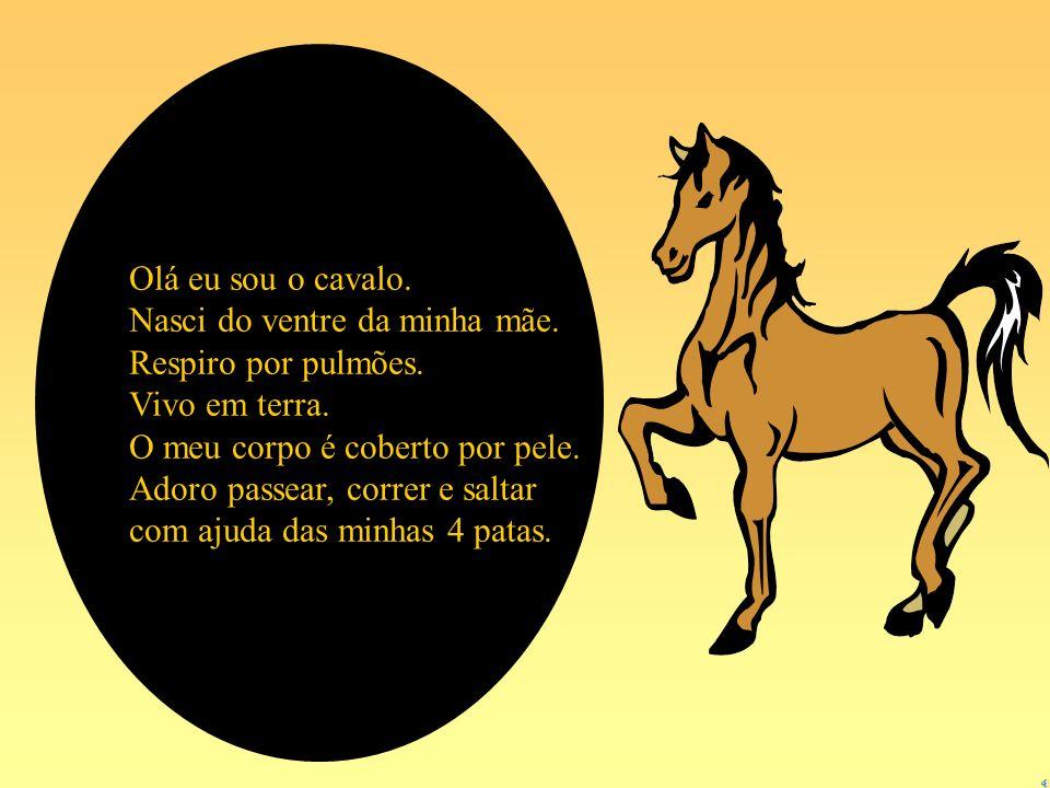 Olá eu sou o cavalo. Nasci do ventre da minha mãe. Respiro por pulmões. Vivo em terra. O meu corpo é coberto por pele.