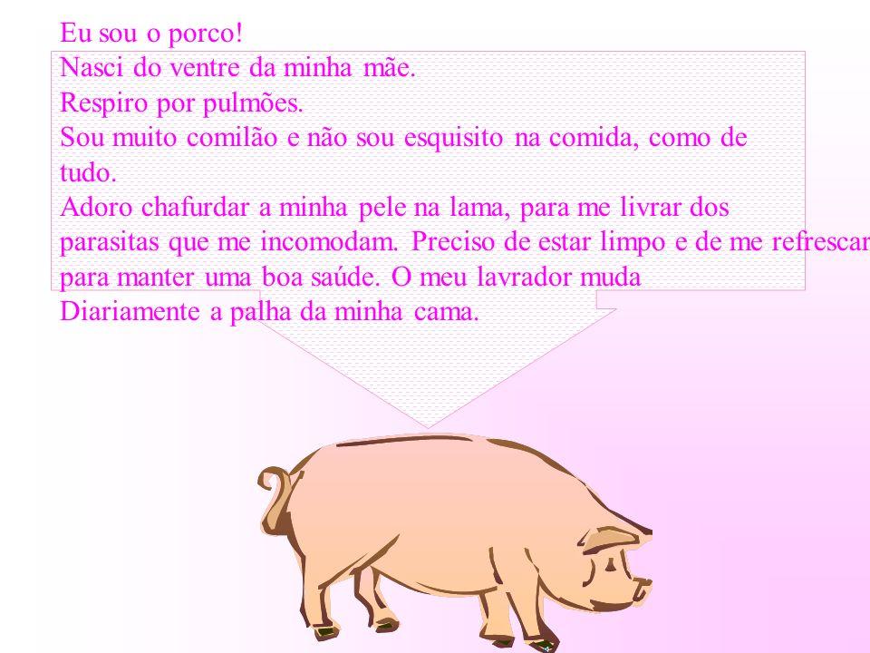 Eu sou o porco! Nasci do ventre da minha mãe. Respiro por pulmões. Sou muito comilão e não sou esquisito na comida, como de.