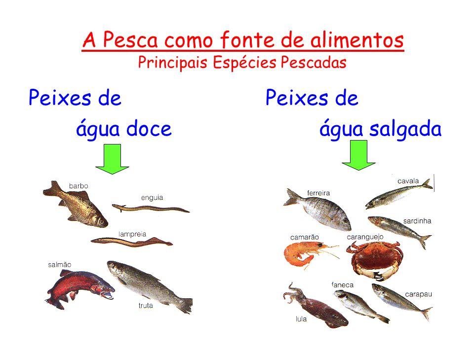A Pesca como fonte de alimentos Principais Espécies Pescadas