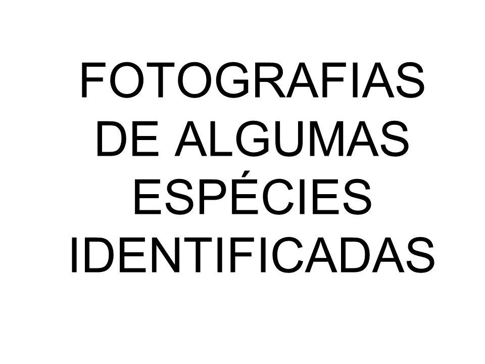 FOTOGRAFIAS DE ALGUMAS ESPÉCIES IDENTIFICADAS