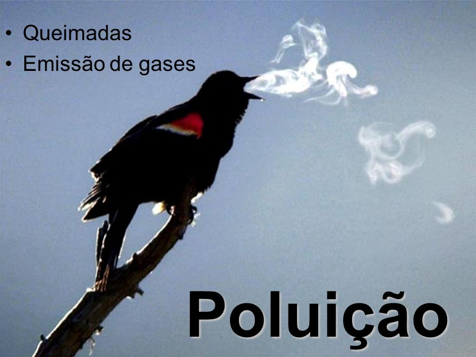 Queimadas Emissão de gases Poluição