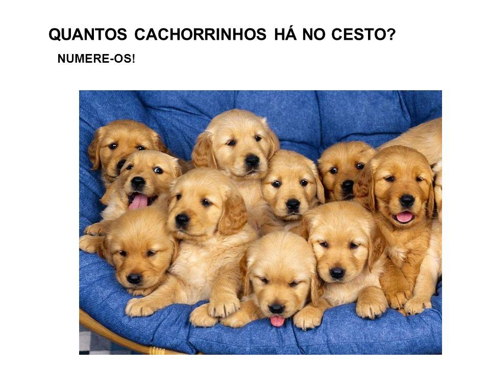 QUANTOS CACHORRINHOS HÁ NO CESTO
