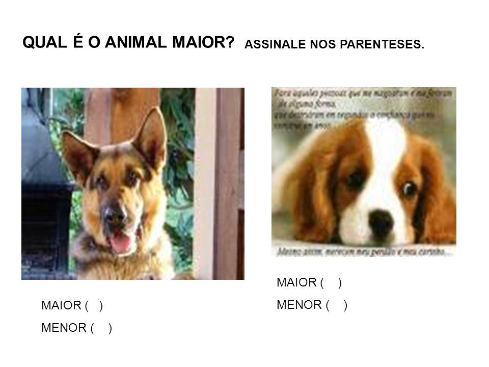QUAL É O ANIMAL MAIOR ASSINALE NOS PARENTESES. MAIOR ( ) MENOR ( )