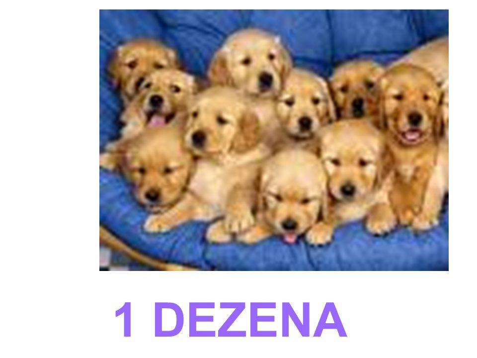 1 DEZENA