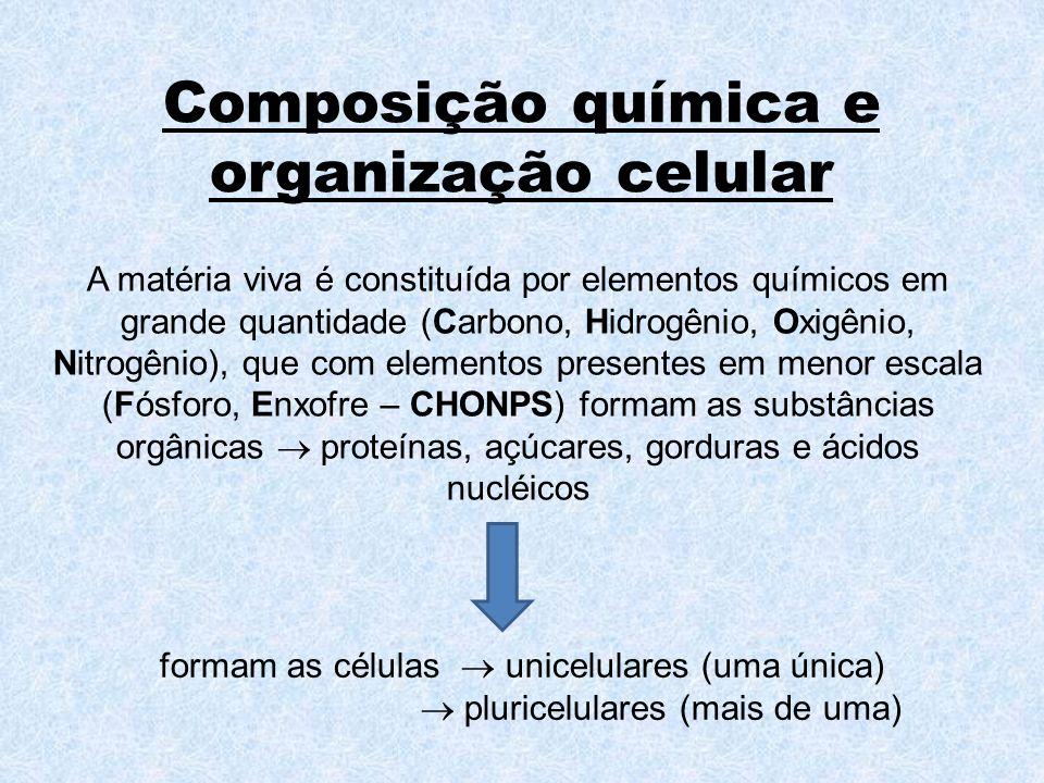 Composição química e organização celular