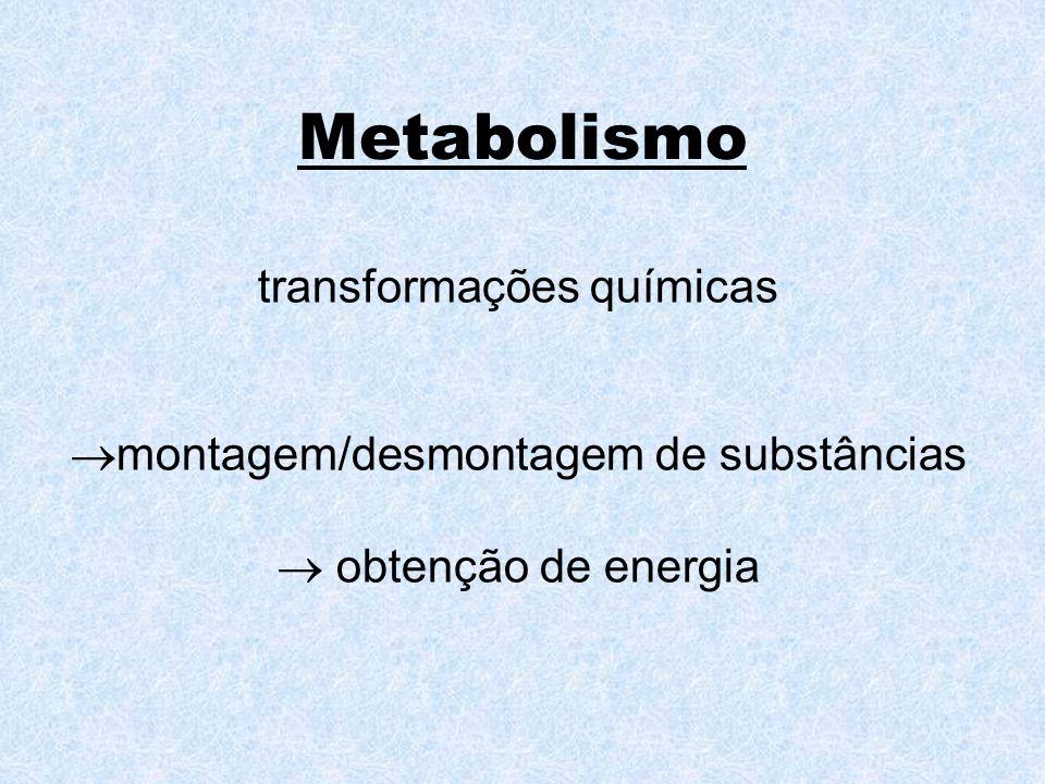 Metabolismo transformações químicas