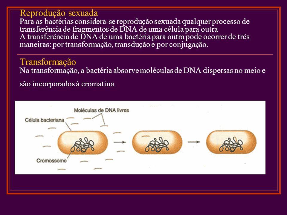 Reprodução sexuada Para as bactérias considera-se reprodução sexuada qualquer processo de transferência de fragmentos de DNA de uma célula para outra A transferência de DNA de uma bactéria para outra pode ocorrer de três maneiras: por transformação, transdução e por conjugação.