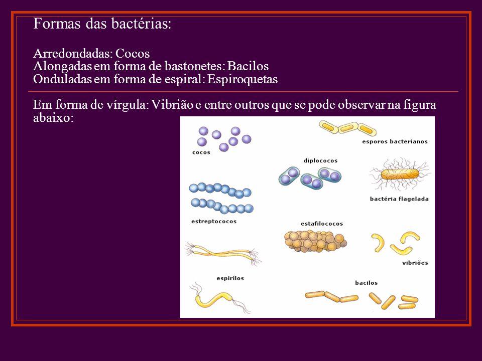 Formas das bactérias: Arredondadas: Cocos Alongadas em forma de bastonetes: Bacilos Onduladas em forma de espiral: Espiroquetas Em forma de vírgula: Vibrião e entre outros que se pode observar na figura abaixo: