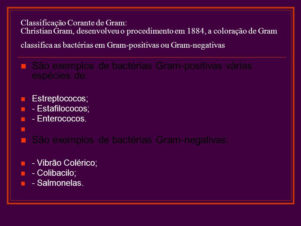 São exemplos de bactérias Gram-positivas várias espécies de: