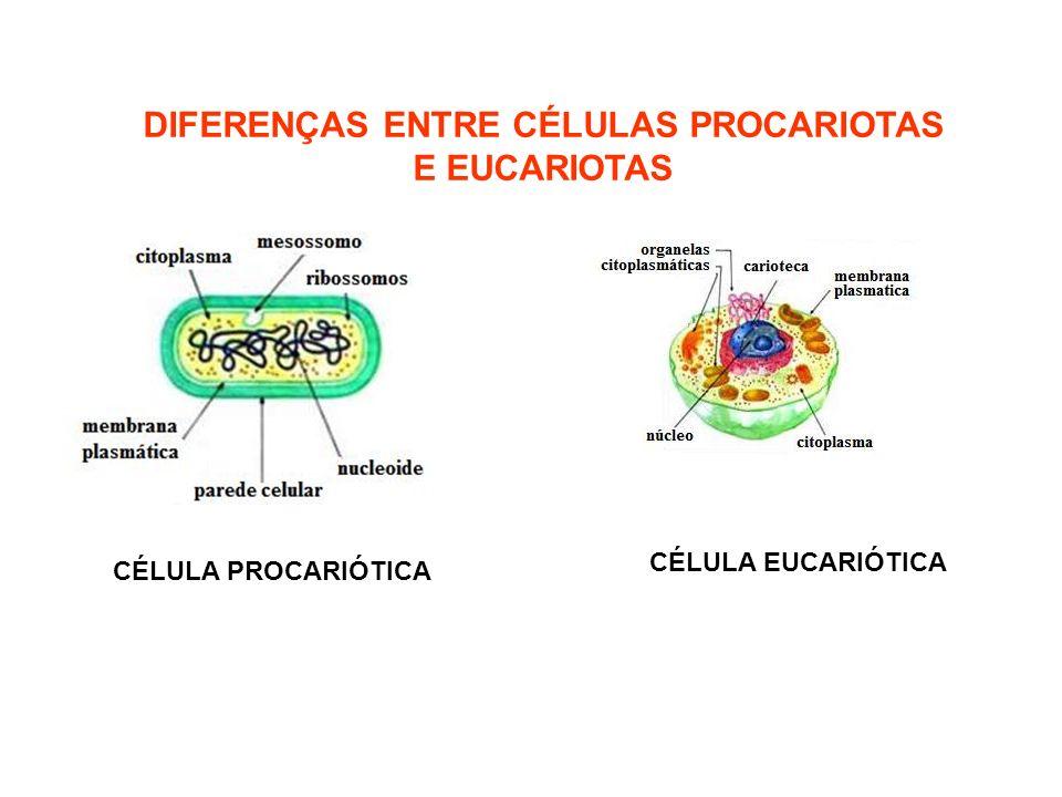 DIFERENÇAS ENTRE CÉLULAS PROCARIOTAS E EUCARIOTAS