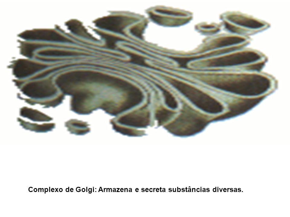 Complexo de Golgi: Armazena e secreta substâncias diversas.
