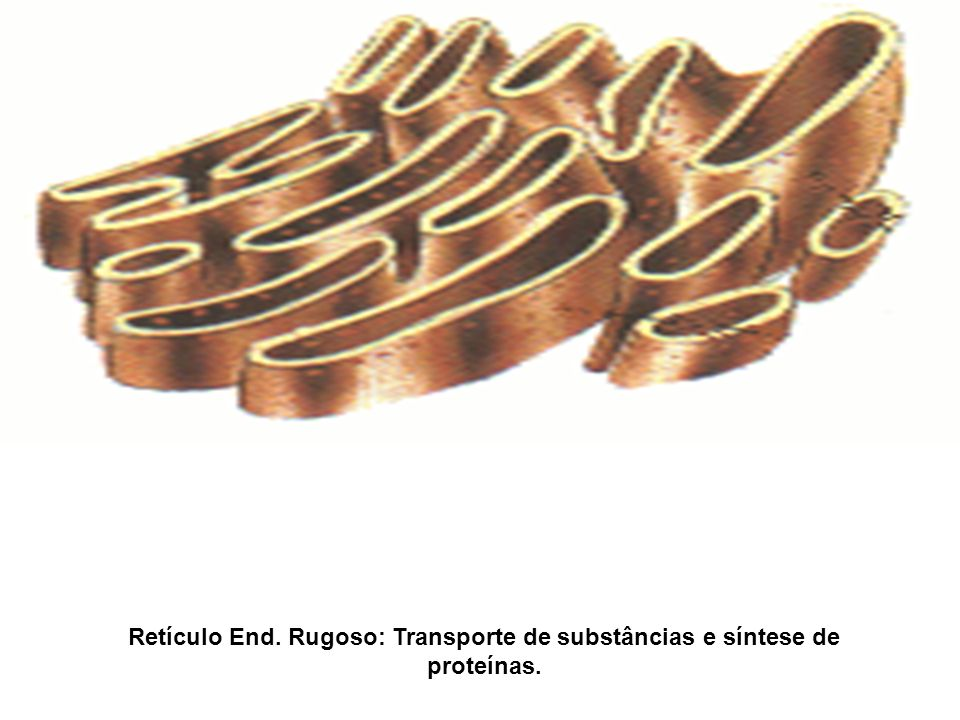 Retículo End. Rugoso: Transporte de substâncias e síntese de proteínas.