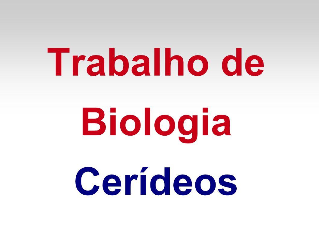 Trabalho de Biologia Cerídeos