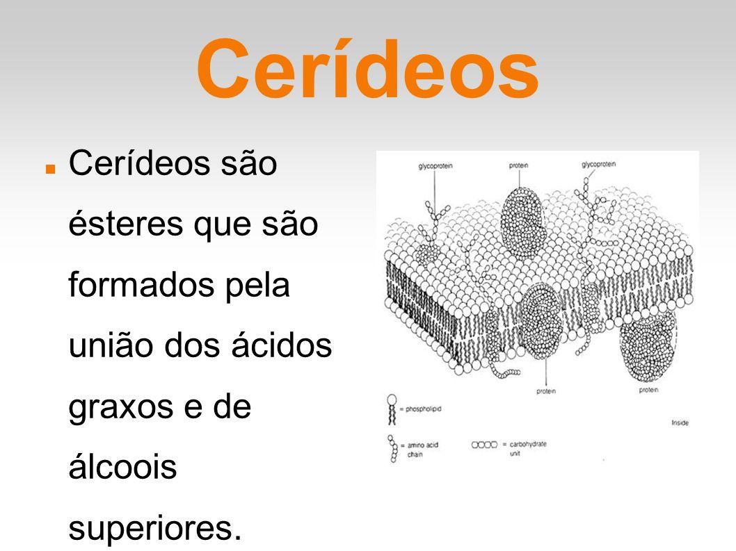 Cerídeos Cerídeos são ésteres que são formados pela união dos ácidos graxos e de álcoois superiores.