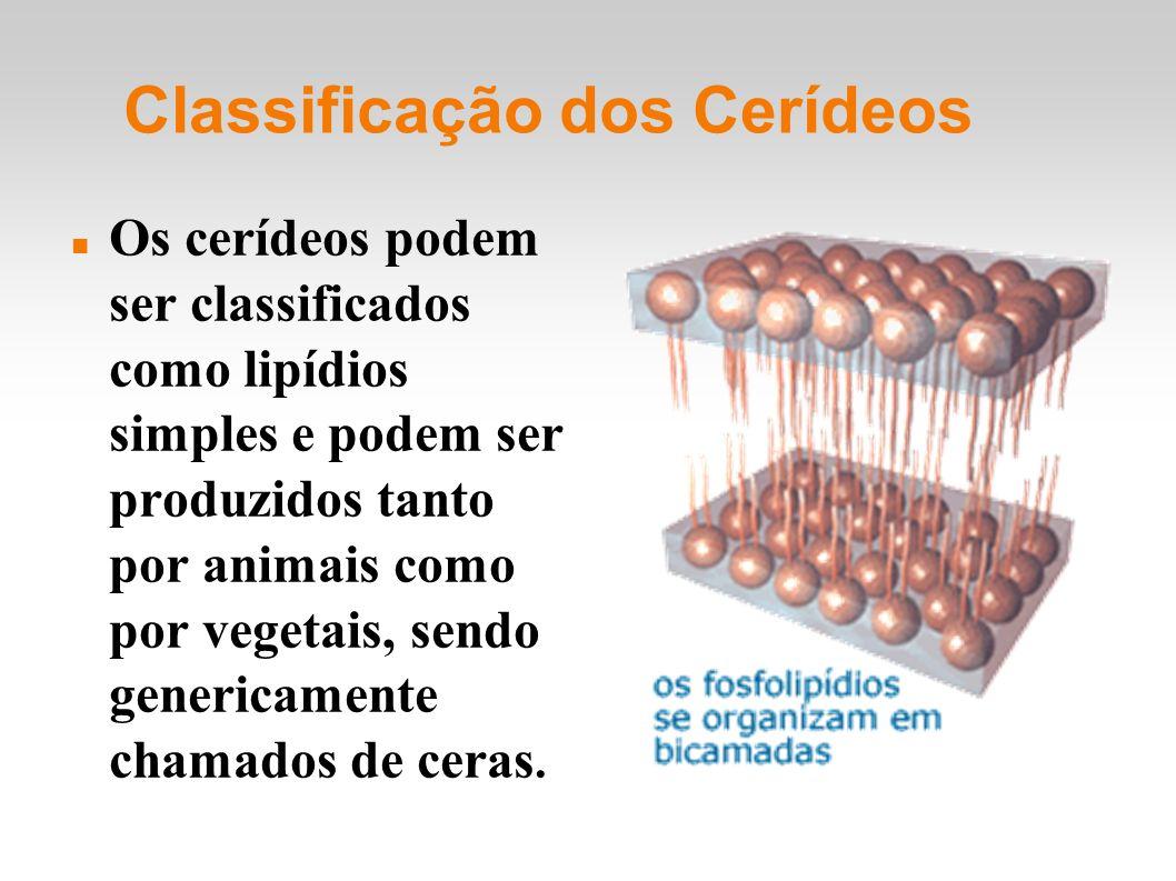 Classificação dos Cerídeos