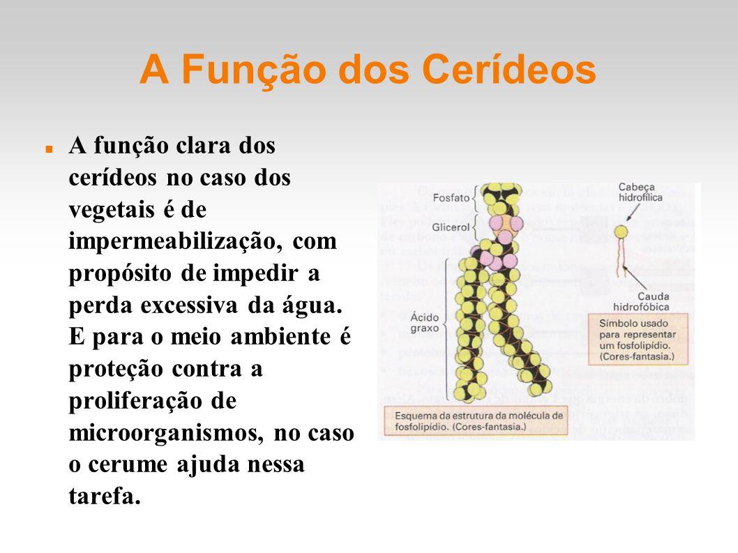 A Função dos Cerídeos