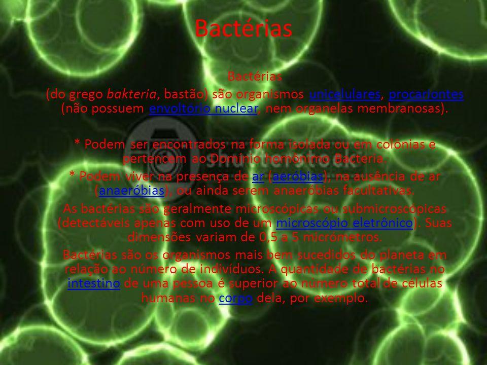 Bactérias Bactérias.