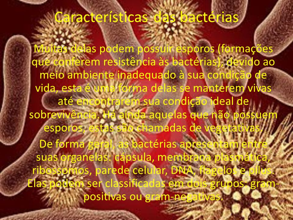 Características das bactérias