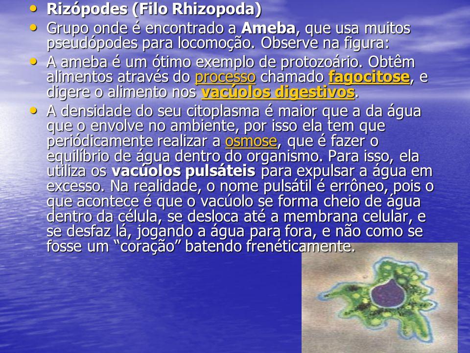 Rizópodes (Filo Rhizopoda)