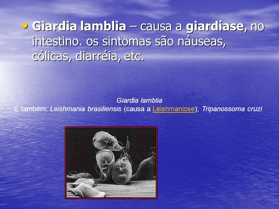 Giardia lamblia – causa a giardíase, no intestino