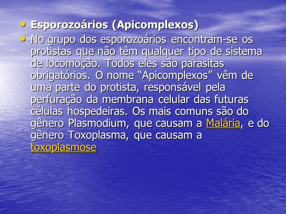 Esporozoários (Apicomplexos)