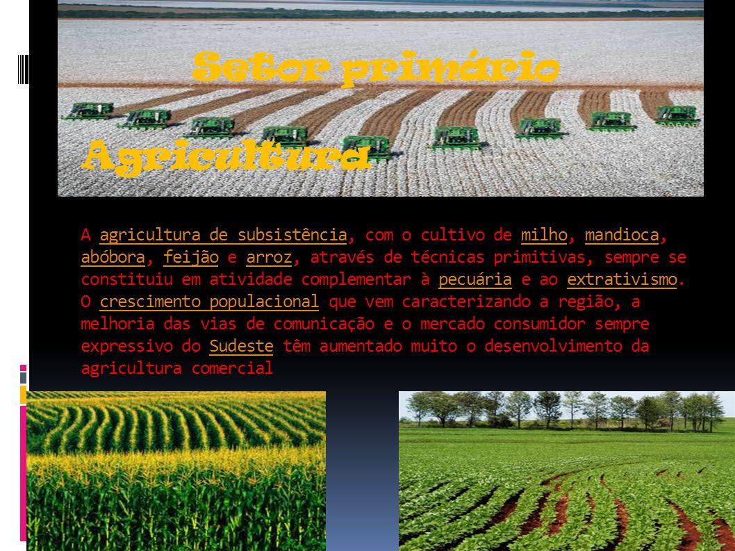 Setor primário Agricultura A agricultura de subsistência, com o cultivo de milho, mandioca, abóbora, feijão e arroz, através de técnicas primitivas, sempre se constituiu em atividade complementar à pecuária e ao extrativismo.