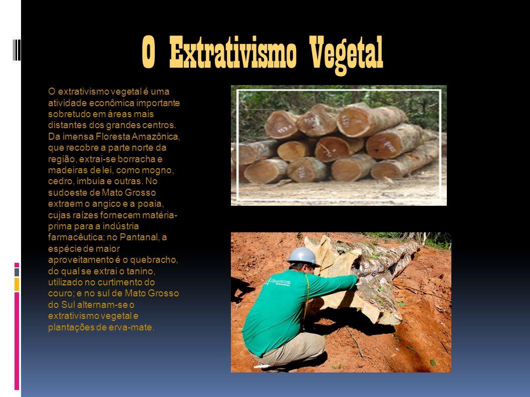 O Extrativismo Vegetal