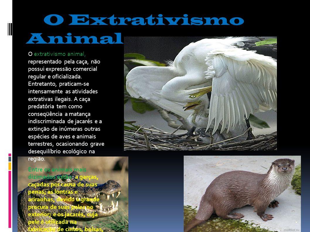 O Extrativismo Animal