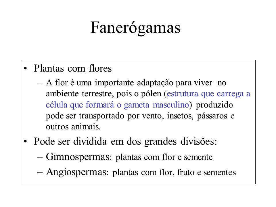 Fanerógamas Plantas com flores