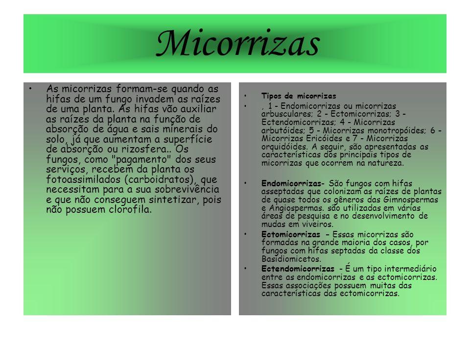 Micorrizas