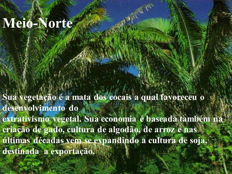 Meio-Norte Sua vegetação é a mata dos cocais a qual favoreceu o desenvolvimento do.